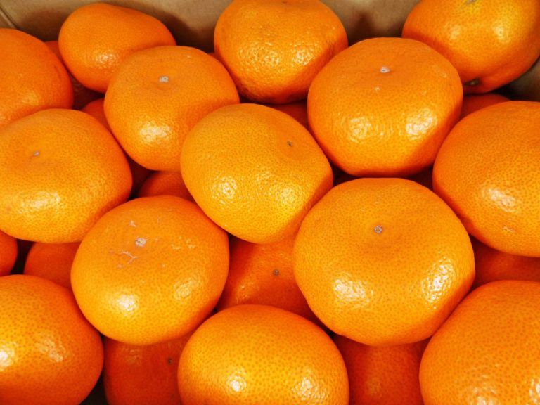 mikan5LM
